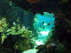 Underwater cave in tropical coral reef
