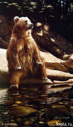 Wildlife art prints reproduced from artist Collin Bogle's original wildlife paintings. Hand signed open and limited edition giclées printed on quality archival paper or canvas. Animals include bears, birds, big cats, wolves and more! Animals And Pets, Funny Animals, Cute Animals, Wild Animals, Baby Animals, Wildlife Paintings, Wildlife Art, Beautiful Creatures, Animals Beautiful