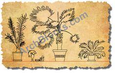 AutoCAD Symbols House Plants 02