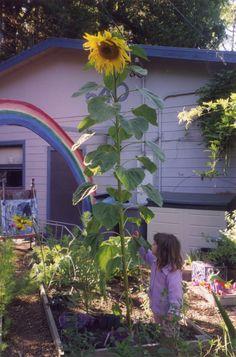11 ways to make gardening extra fun for kids. #garden #gardenchat #kids, from http://www.slowfamilyonline.com