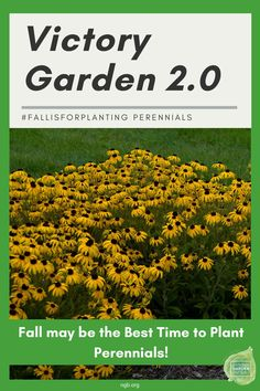 Victory Garden 2.0 #fallisforplanting Perennials - Fall may be a better time to plant perennials than spring. Like spring, fall has cooler, rainier weather that is more conducive to helping plants establish. Unlike spring, fall doesn't subject freshly planted perennials to the stress of summer heat and the dry spells this can cause. - National Garden Bureau Planting Bulbs, Planting Flowers, Amazing Gardens, Beautiful Gardens, Garden Posts, Garden Ideas, Fall Perennials, Ornamental Kale, Victory Garden