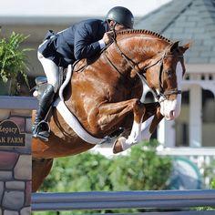 Chris Payne on Fibonacci at WEF | The Chronicle of the Horse