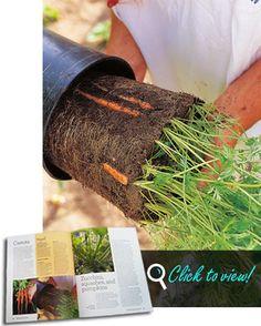 Ideas for small balcony garden Grow Carrots on your Edible Balcony!
