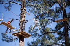 Flagstaff Extreme - Tree top adventure course---its a crazy course..black shrit is a must ...