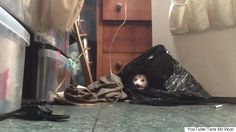 Woman Records Bizarre Encounter With Opossums In Her Closet - http://www.77evenbusiness.com/woman-records-bizarre-encounter-with-opossums-in-her-closet/