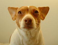 Camilla Engman's Dog / Morran