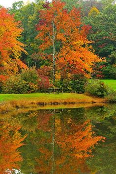 Autumn trees in a blaze of color by a lake in North Carolina. Lovely!