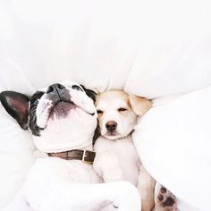 French Bulldog and Puppy friend ❤️ Cute Puppies, Cute Dogs, Dogs And Puppies, Doggies, Adorable Babies, Baby Animals, Funny Animals, Cute Animals, Jolie Photo