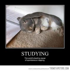 Funny animals: Studying the worlds leading cause of. Studying - the worlds leading cause of spontaneous napping Funny Demotivational Posters ad, animal, funny, pictures Funny Cute, Hilarious, Funny Jokes, Funny Bunnies, Cute Bunny, Bunny Meme, Bunny Puns, Funny Rabbit, Rabbits