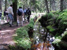 Wandern im Harz ist jetzt schon ein Volkssport geworden. Hier sind Besucher auf dem Goetheweg vom Torfhaus zum Brocken, dem so genannten Harzer Hexen-Stieg, unterwegs. Der Weg hat sich zu einem Magneten für das Mittelgebirge entwickelt.