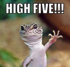 Leopard gecko giving a high five!
