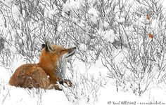 """Winter Animals 