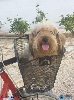 BIKE FAN    #cute dog puppy