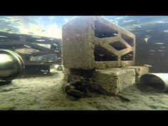 My backyard freshwater Lobster farm - YouTube