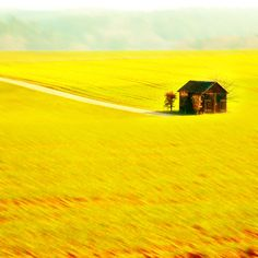 Fields of Goldenrod inspiration.