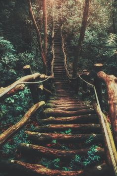 forest stairs road