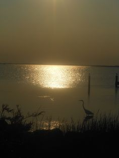 """""""Silence"""" Egret on the Sound  Corolla, NC. Photo by Rebecca Hough"""