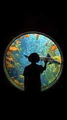 A window into another world Monterey Bay Aquarium, Another World, Fish Tank, Window, Celestial, Outdoor, Outdoors, Fishbowl, Aquarium