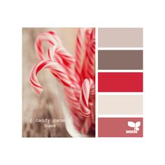 Design Seeds ❤ liked on Polyvore featuring backgrounds, design seeds, colors, palette and colours