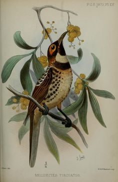 1873 - Proceedings of the Zoological Society of London. - Biodiversity Heritage Library