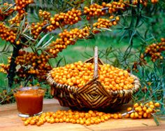 Basket with Sea Buckthorn berries and jam / (Hippophae rhamnoides) Mabon, Samhain, Witch Spring, Vitamin C, Yule, Container Gardening, Berries, Pumpkin, Mint