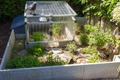 russian tortoise outdoor substrate - Google Search