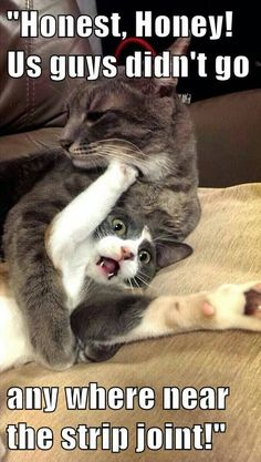 Cats and kittens are so funny and cute animals, they are simply the best! Just look how all these cats & kittens play, fail, get along with dogs, get their Funny Animal Memes, Funny Animal Pictures, Cute Funny Animals, Cat Memes, Funny Cute, Funniest Animals, Funny Memes, Humorous Animals, Animal Captions