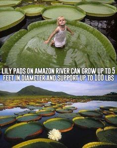I am GOING to get pictures of my children on the lily pads here!!!