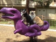 Two Too Cute on Purple - two Pembroke Welsh Corgis ride a Purple Dinosaur - from twosillycorgis via OCD: Obsessive #Corgi Disorder
