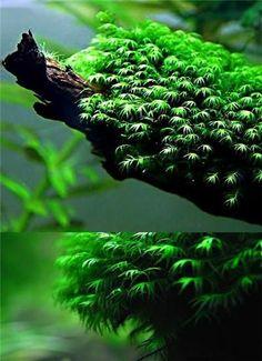 Hot Sale 1000Pcs Aquarium Plant Seeds, Radiation Absorptionn, Fish Tank Background Aquatic Indoor Ornamentals Free Shipping