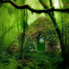 The perfect secret prayer room in the woods.