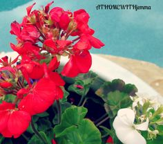 AT HOME WITH JEMMA: Container Gardening-Confessions of a Plant Lover