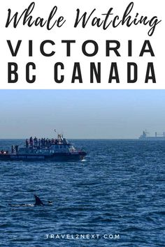 Whale watching Victoria: A thrilling orca spotting cruise with Orca Spirit Whale Advcentures in British Columbia, Canada. Visit Vancouver, Vancouver Island, Columbia Outdoor, Victoria Bc Canada, Whale Watching, Canada Travel, British Columbia, Where To Go, Cool Places To Visit