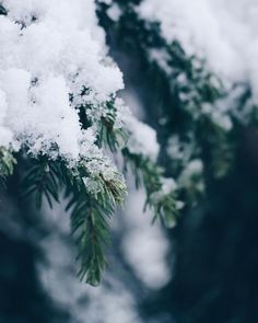Winter snow on pine Winter Magic, Winter Snow, Winter Time, Winter Christmas, Winter Green, Especie Animal, Christmas Aesthetic, Winter Beauty, Of Wallpaper