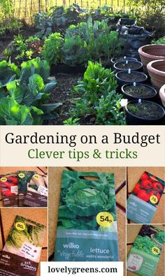 Gardening on Budget: eco-friendly ways to save money in the vegetable garden including making your own compost, sowing seeds frugally and using recycled materials #lovelygreens #organicgardening #zerowaste