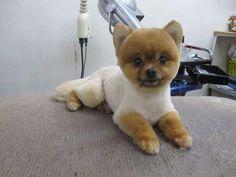 http://www.dog-comachi.com