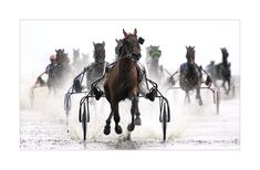 harness horses racing