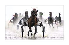harness horses racing