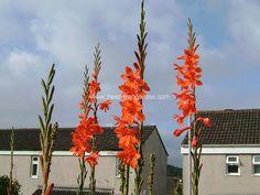 Google Images, Formal Dresses, Garden, Flowers, Plants, Dresses For Formal, Garten, Formal Gowns, Lawn And Garden