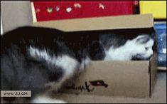 que liindo gatito