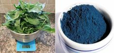 Lovely Greens : Extracting Woad--a natural blue pigment used by the ancient Celts.