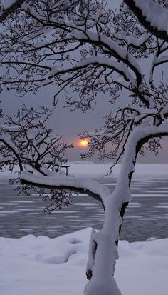 """""""Barren trees like a charcoal etching outlined by frosted branches...."""" from my poem, Shades of Winter. C McCullough."""