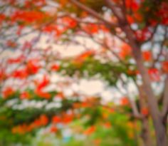 Blur Image Background, Black Background Photography, Photo Background Images Hd, Portrait Background, Studio Background Images, Photo Backgrounds, Background Wallpaper For Photoshop, Duke Bike, Butterfly Wallpaper