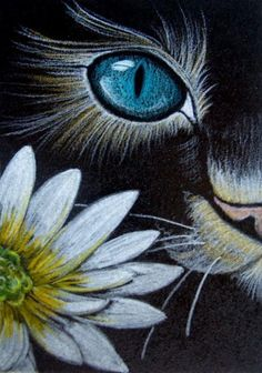"""Cat Behind Marguerite Flower"" par Cyra R. Cancel ""Cat Behind Marguerite Flower"" von Cyra R. Abbrechen This image has get. Cat Drawing, Painting & Drawing, Cats Outside, Pastel Art, Chalk Art, Animal Paintings, Rock Art, Painting Inspiration, Canvas Art"