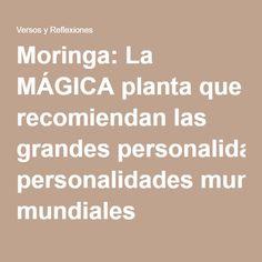 Moringa: La MÁGICA planta que recomiendan las grandes personalidades mundiales
