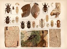 1897 Beetle and Insects Antique Print Waldverderber by Craftissimo