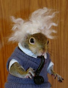 To answer an earlier question...Albert Einstein's favorite animal was the Blue Heron.  It's also believed that he was indeed a vegetarian. So the answer would be yes he loved animals. Photo: Sugar Bush Squirrel as Albert Einstein www.SugarBushSquirrel.com
