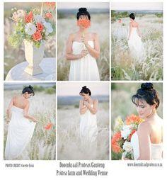 Doornkraal Proteas in Gauteng Farm Wedding, One Shoulder Wedding Dress, Wedding Venues, Wedding Dresses, Wedding Reception Venues, Bride Dresses, Bridal Gowns, Wedding Places, Alon Livne Wedding Dresses