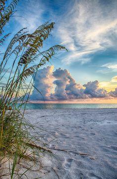 Sarasota sunset through the sea oats | Florida | SVAKODNEVNA INSPIRACIJA