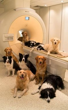 We don't have the facilities for a cat scan, but we can certainly get you a lab report.